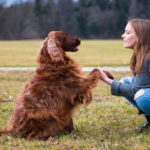 Important Facts About Dog Training That You Can't Ignore