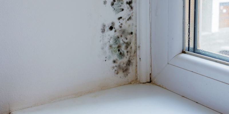 you also may find that you have to use mold removal products