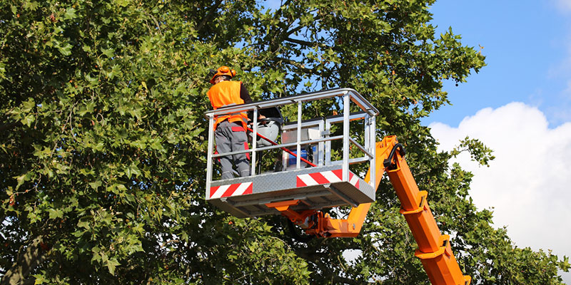 Benefits of Hiring a Reputable Tree Services Company for Your Property