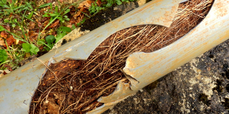 Plumbing Services Handle Pipes Harmed by Tree Roots
