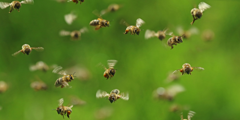 What You Need to Know About Bee Swarms