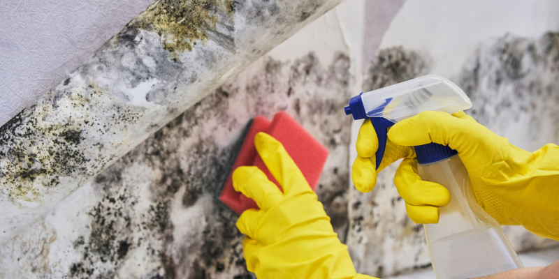 ways you can try DIY mold removal & remediation at home
