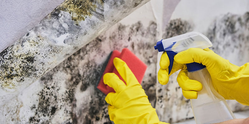 4 Signs It's Time to Call a Mold Removal Services Company