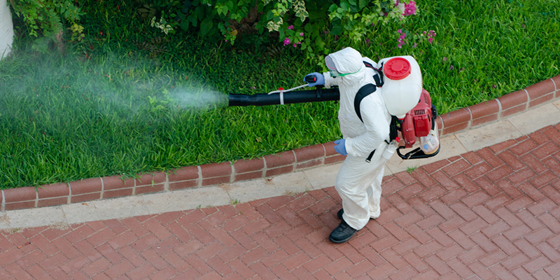 4 Pests You Can Call an Exterminator For